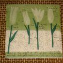 tulipani st 6