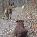 pasenje pasjih ovc :)