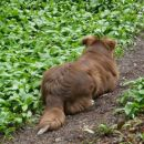 spet misli, da vidi ovce  :)