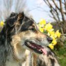 Tana with daffodils