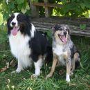 Ranger + Tana ... I hope there will be nice pups...