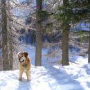 Pit v snegu