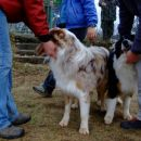Australian shepherd meeting 2007