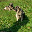 Baja in Boni na straži.
