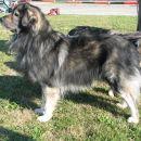 Feld: prvak pasme in najlepsi avtohtoni pes