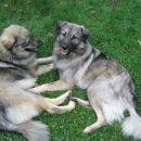 Prijateljici Čajka in Dina