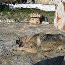 Po takšni igri je pa pes hitro utrujen, prav paše malo počitka.
