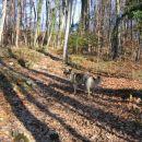 Še zadnjih nekaj metrov gozda... Branka je tu že precej zadihana in napreduje bolj počasi,