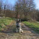 To pot pa Čajka predlaga tistim, ki bi šli gor peš iz Stične.