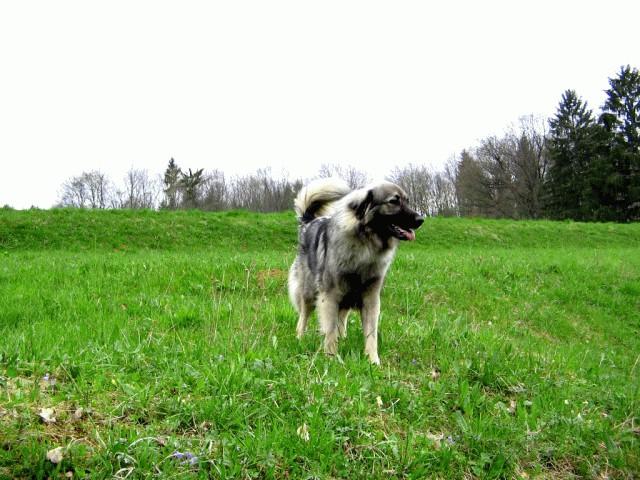 Cajkina pomlad 2005 - foto