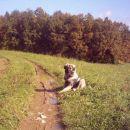 Jesenski sprehod s 5 mesečno Čajko