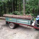 Delo v gozdu