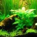 Akvarij 120L