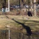 Živalski vrt