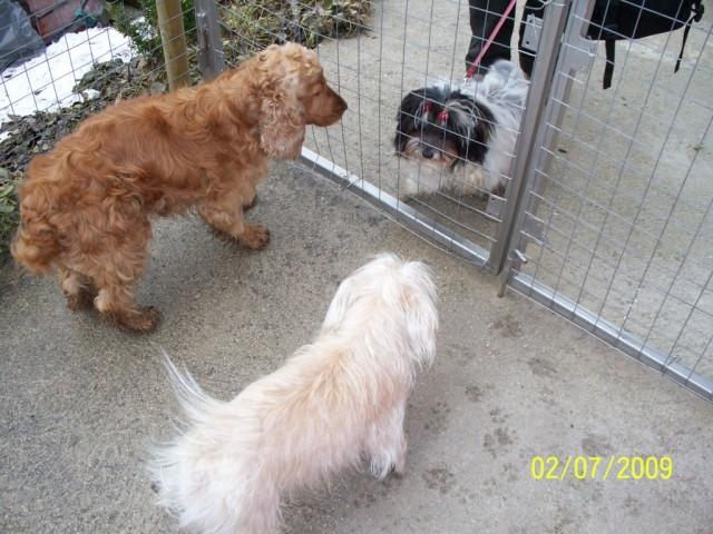 Zala in Tiki pozdravljata Zoyo.