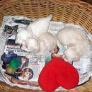 sestrice počivajo