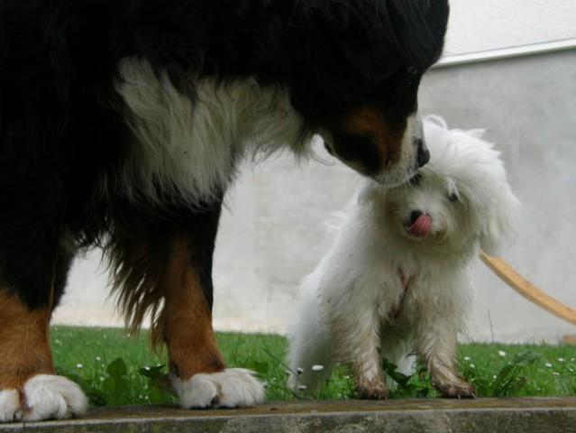 Isi & Nana Gozd 23/8/08 - foto
