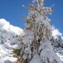macesen v snegu