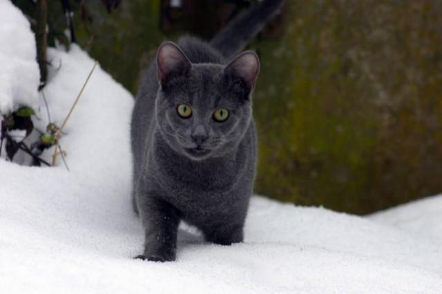 Dubi na snegu - foto