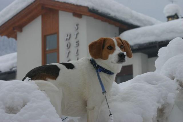 Sneg,Dubi... - foto
