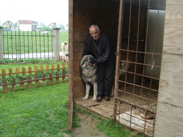 Sharki 7 Month's with his ovner Dulla from Ferizaj.