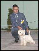 Terrier show Ruma 2008. Smarti PRM, I junior best in show. Handlao Nemanja Jovanović