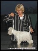 Terrier show-Ruma, jesen 2008, Žoli, PRM