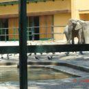 Golobi in slon