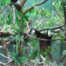 Evo najlepše ptice- tukane