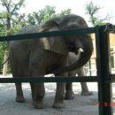 Velik slon