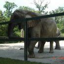 Slon pozira