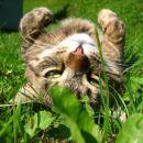 smiso življenja je ležanje na travi (: