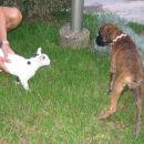 Prvo srečanje z mačkonom