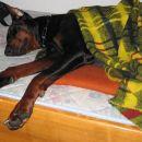 Zvečer je vsa utrujena zasmrčala v topli posteljici