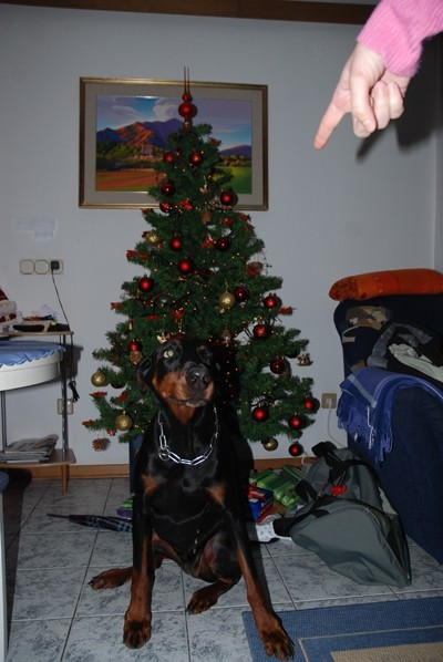 Božič 06 - foto