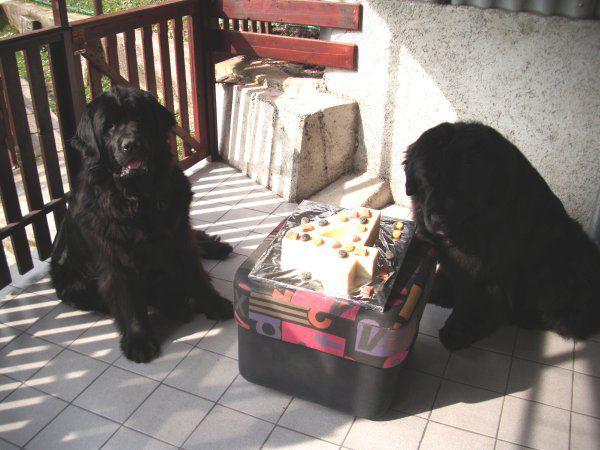 Sona praznuje svoj 4. rojstni dan, 20.03.2010 - foto