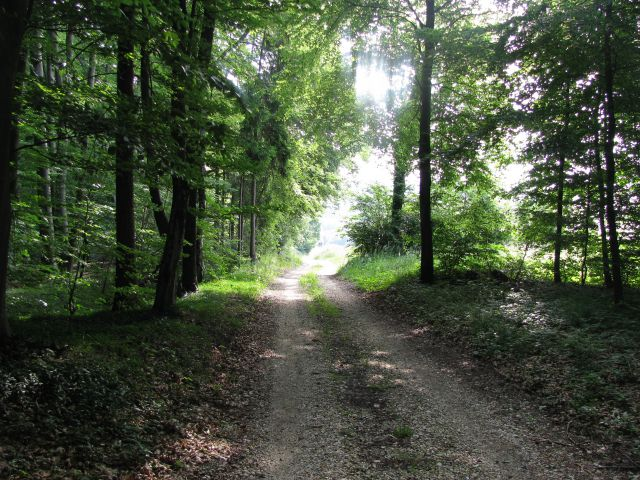 Negovske šume 28.5.2015 - foto