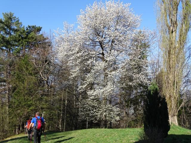 Pečke Mariborska 2.4.2017 - foto