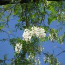 Dravsko polje-Babica si je zaželela ravnine