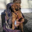Smajli, star 6 mesecev, zelo nežen kuža, išče dom