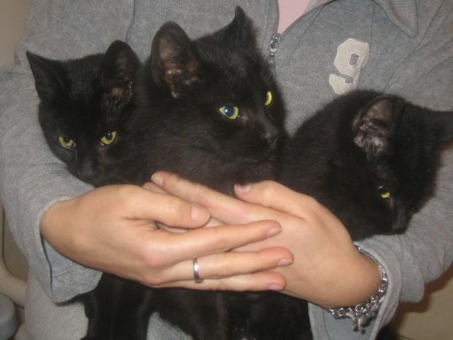 Maza, Miži in Ninika iščejo nov dom. Stari so 6-7 mesecev in zelo prijazni.- oddani.
