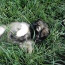 Poležavanje v travi pa res paše