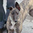 Greyhoundica Lola; 23.2.2014