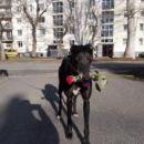 greyhoundica Eli; 16.4.2015