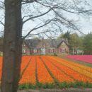 Belgija - Nizozemska