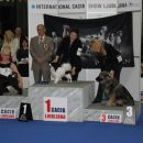 Jena Srednjedravska 3. mesto BIS Puppy 14.01.2012 CACIB Ljubljana