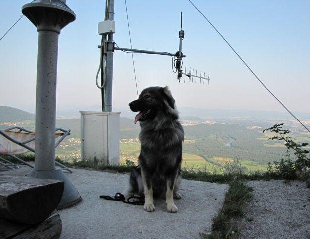 Jena Srednjedravska na Šmarni gori