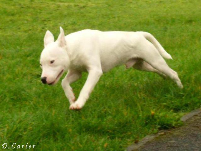 Haine having a run