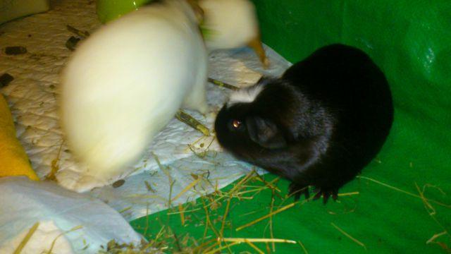 Lili, Snežka in Fili