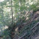 nekaj gozdarskih
